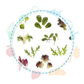 Nuova regolamentazione etichettatura prodotti baby leaf