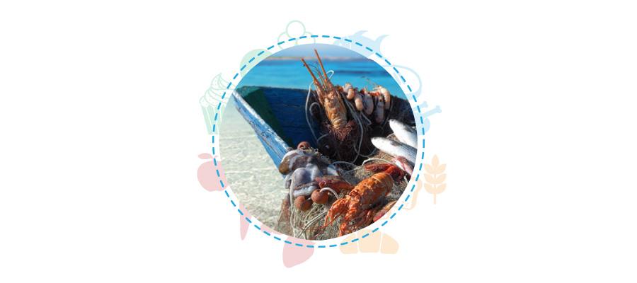 linee guida sicurezza alimentare pesca